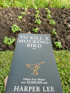 0319   To Kill a Mockingbird   Lee   74%   Very Good